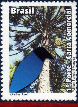 11 - 46dp Brazil 2011 - Blue Jackdaw,  Birds,  Animals & Fauna,  Depersonalized photo
