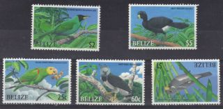 Belize - - Endangered Birds photo