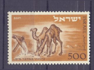 Israel Stamp 1950 Negev Camel In The Desert Lightly Hinged Mlh Scott 25 Vf photo