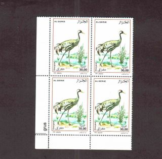 Algeria 2006 - Birds