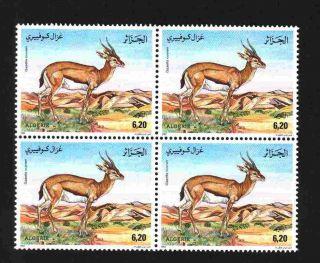 Algeria 1992 - Gazelle Cuvieri
