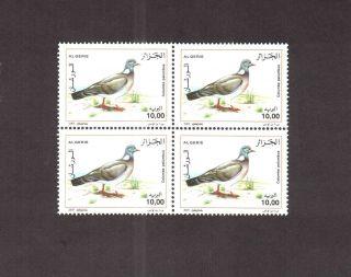 Algeria 2005 - Birds