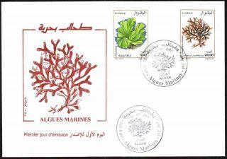 Algeria 2003 - Seaweeds