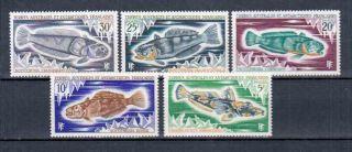Taaf Fish photo