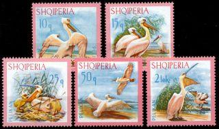 Albania - 1967 - Birds - Pelicans - photo