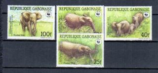 Gabon Animals photo