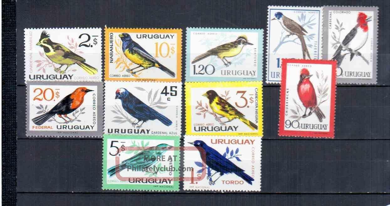 Uruguay Birds Animal Kingdom photo