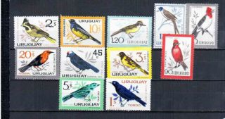 Uruguay Birds photo