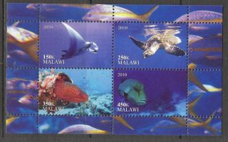 2010 Turtles Fishes Ii Sheet Of 4 Cb060 photo