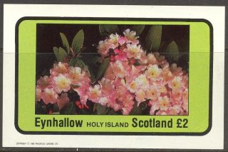 Eynhallow (br.  Local) 1982 Flowers I S/s 2£ Ne093 photo