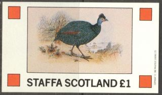 Staffa (br.  Local) 1982 Birds Ix S/s 1£ Ns054 photo