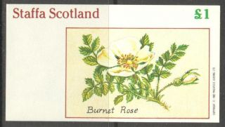 Staffa (br.  Local) 1982 Flowers Ii Burnet Rose S/s 1£ Ns025 photo